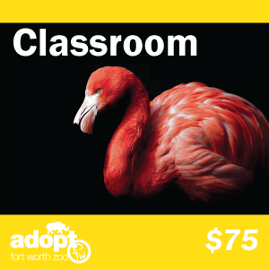 Fort Worth Zoo Classroom adoption logo
