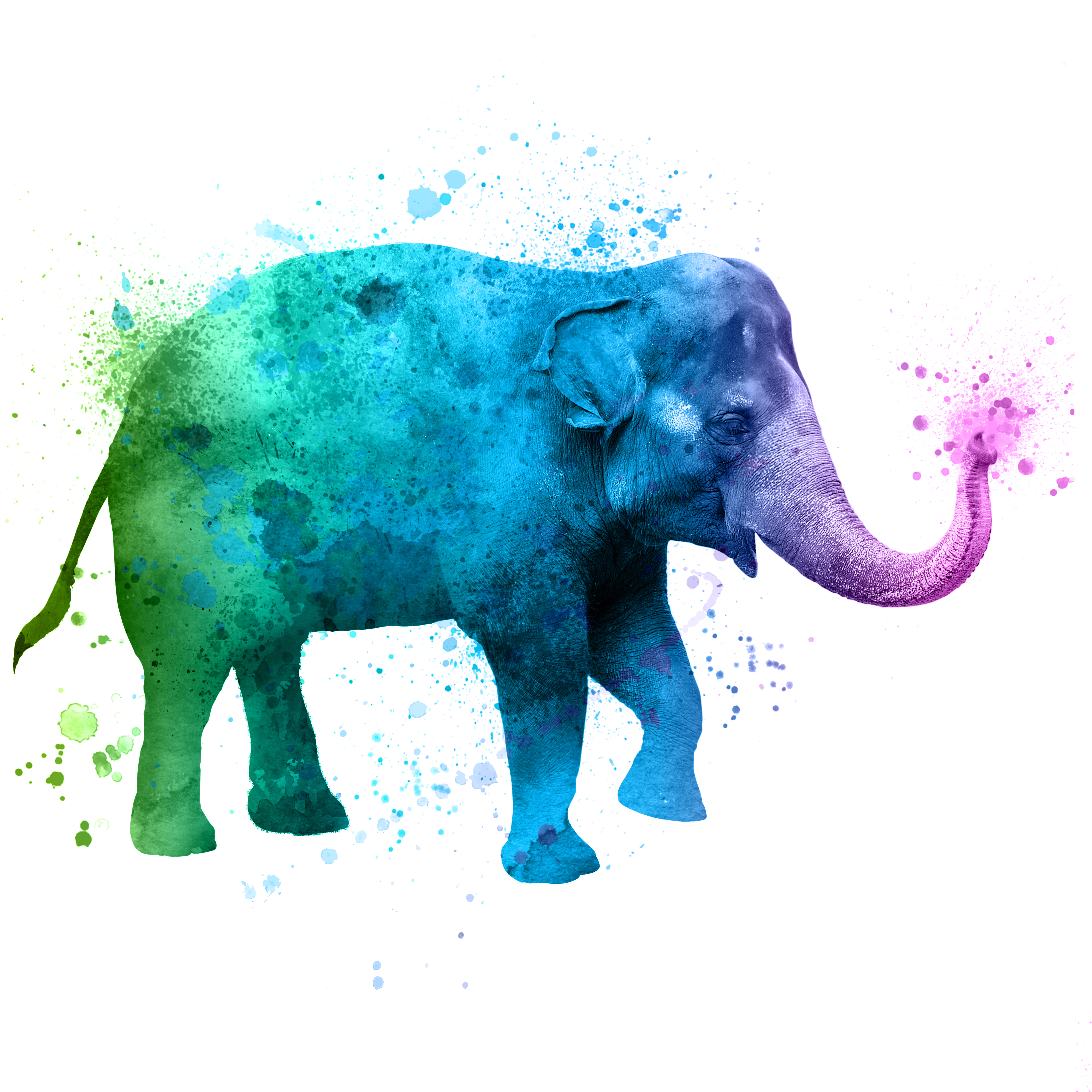 watercolor elephant for A Wilder Vision campaign at the Fort Worth Zoo