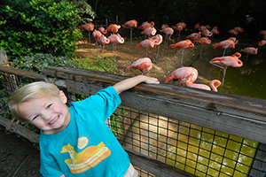 visiting the flamingo exhibit at the Fort Worth Zoo