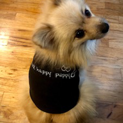 think happy puppy tees