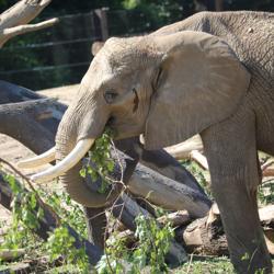 Tuesday Dec 5 2017 Zoo Wildlife Safari Park