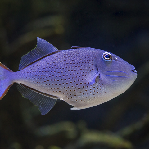 how to catch saltwater fish