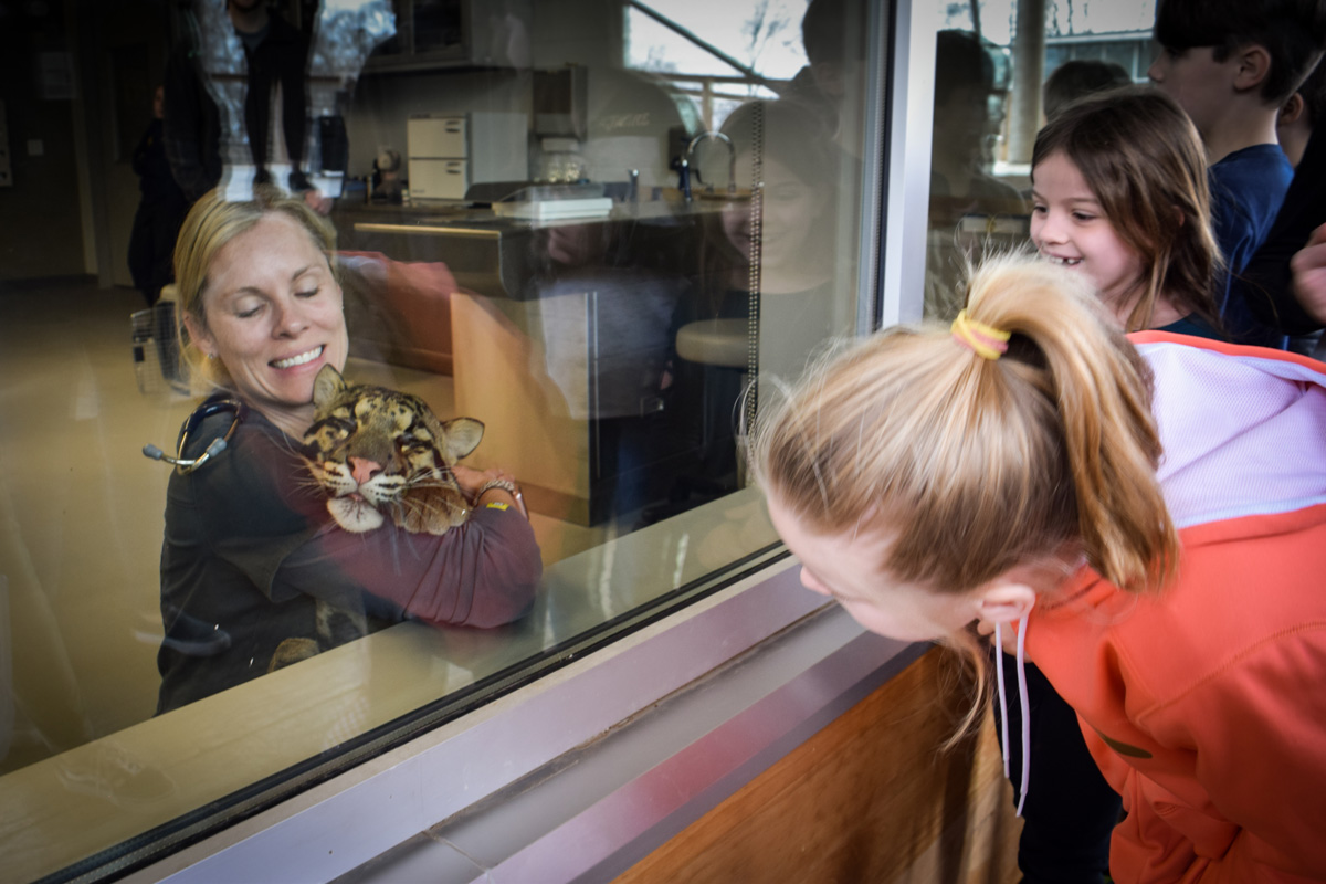 Guests looking at baby clouded leopard through glass at vet center