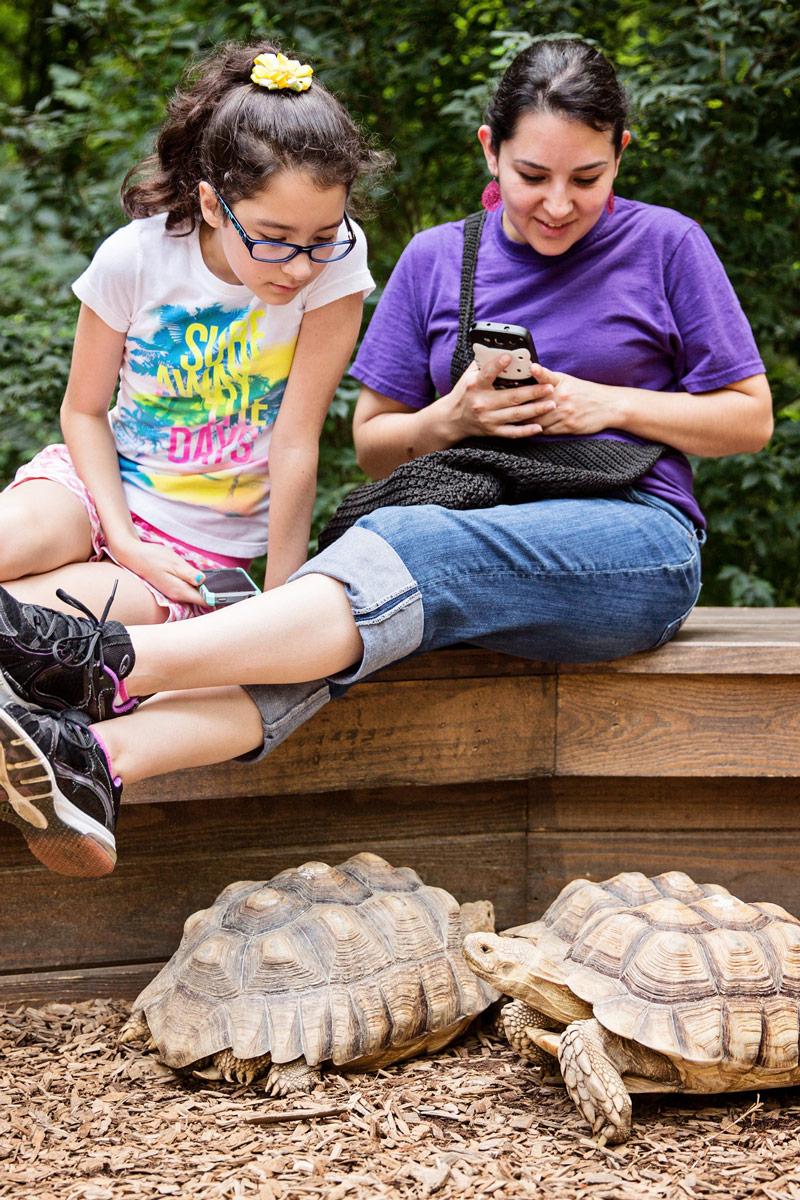 Mother and daughter sitting next to tortoises