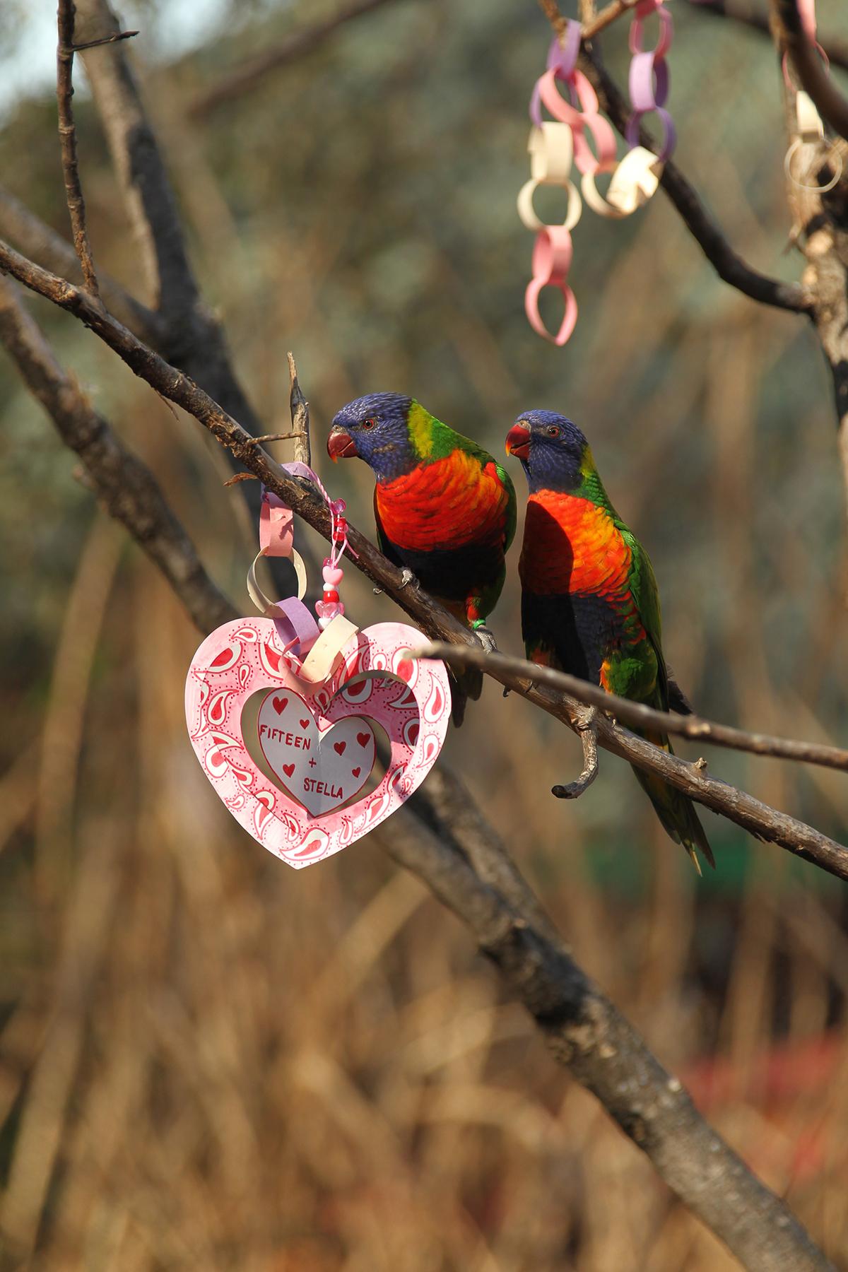 Enrichment For Your Parrot