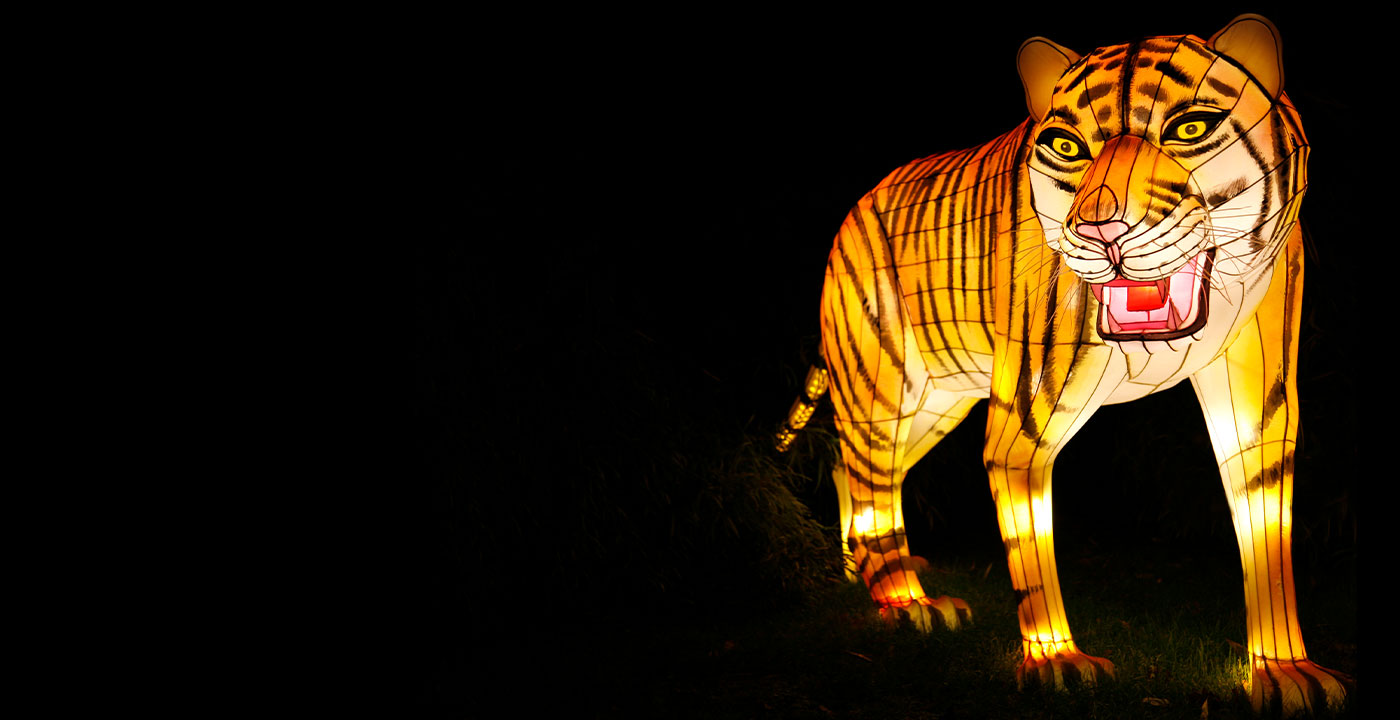 Large tiger lantern glowing