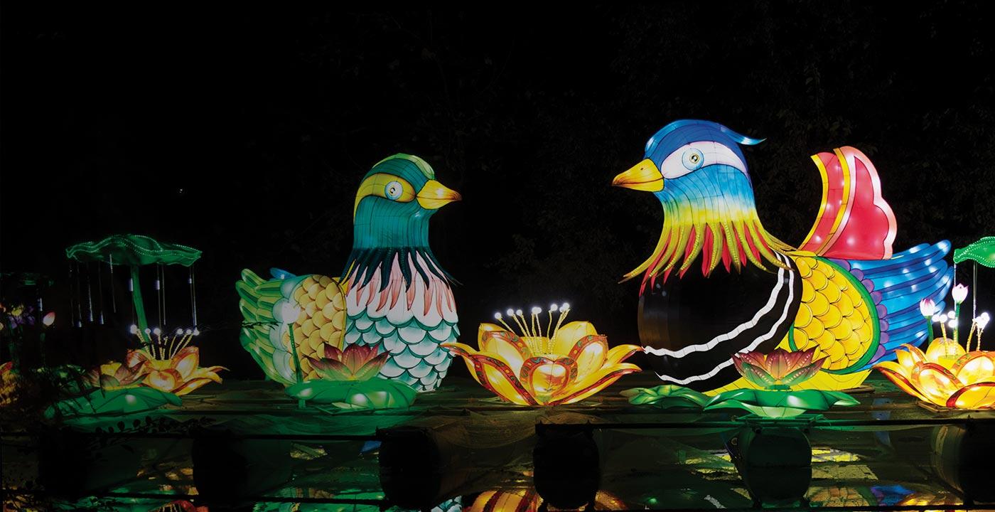 glowing mandarin duck lanterns on a pond