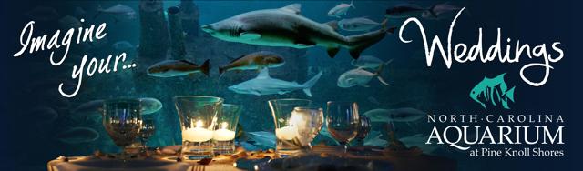Aquarium business plan