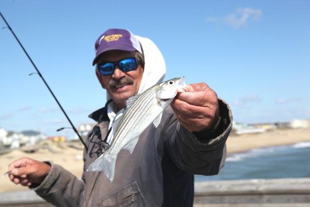 Jennette 39 s pier fishing report nags head nc 27959 for Jennette s fishing pier