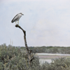 "Rosemary Kramer: ""Winter Waterbirds"" art show"