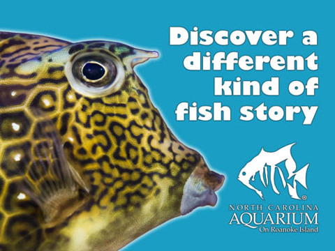 Discover a different kind of fish story