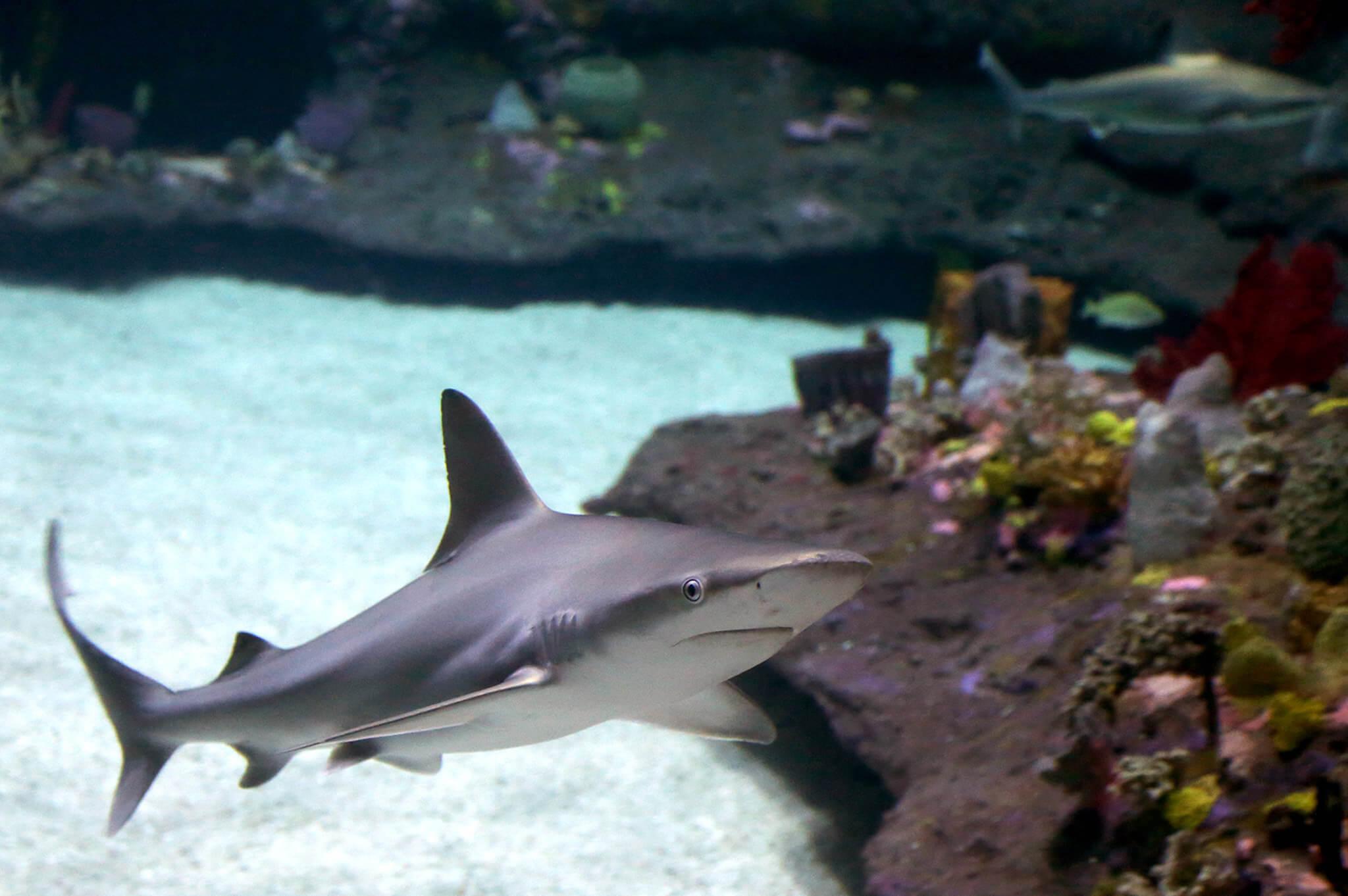 aquarium geschäft