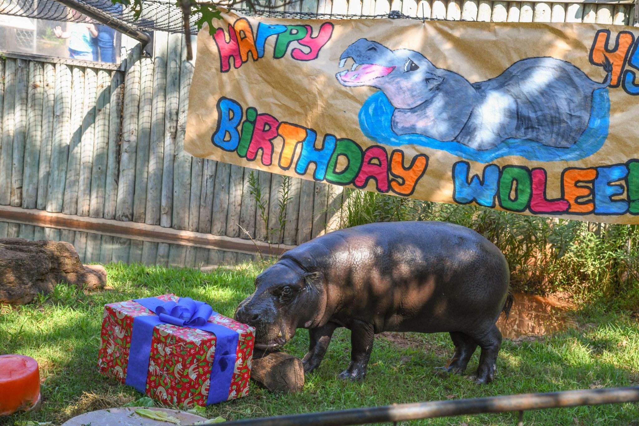 Wolee Birthday