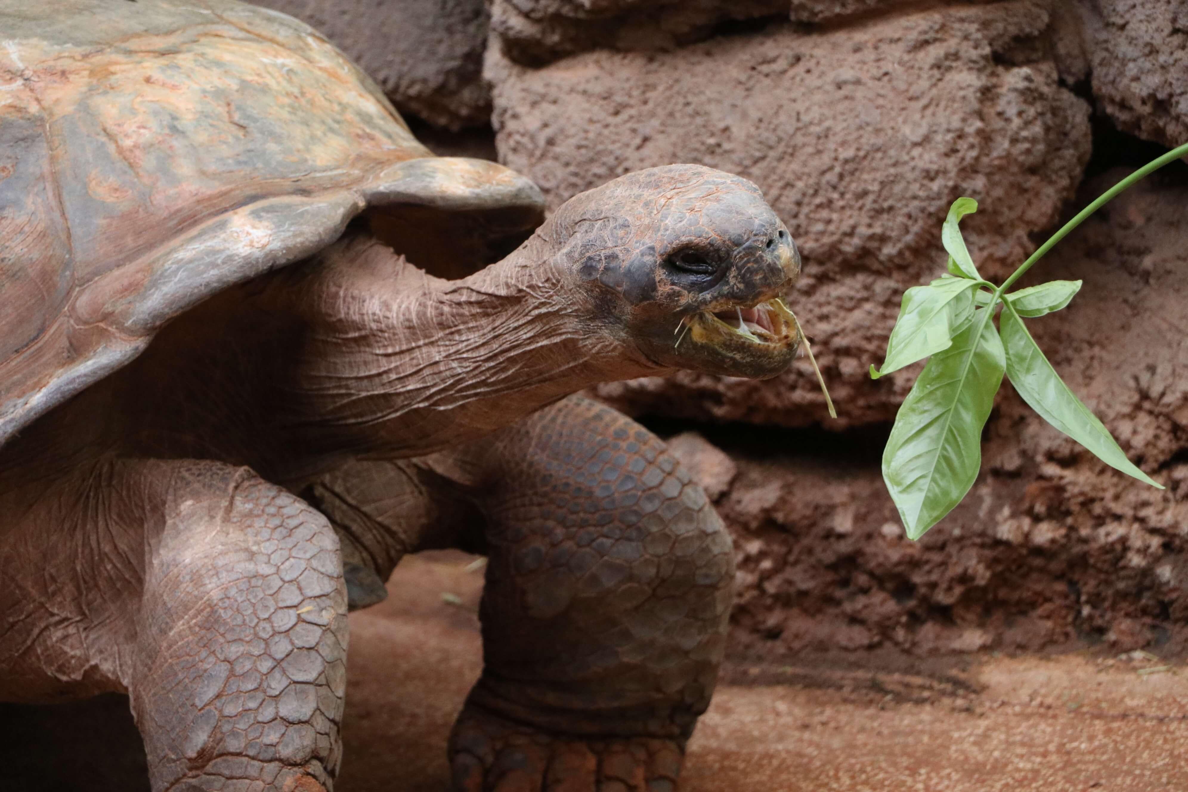 Blog - Oklahoma City Zoo Animals