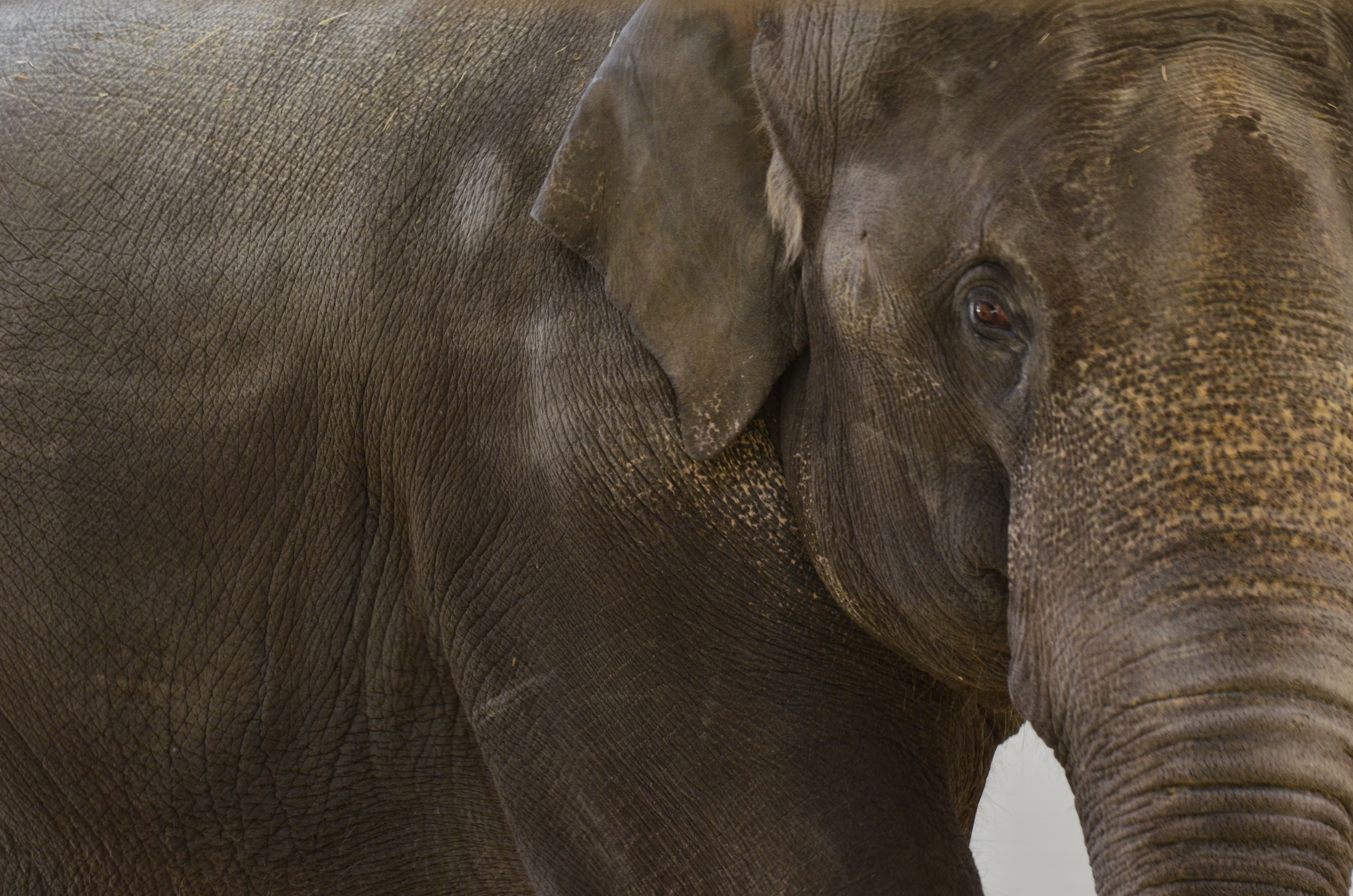 Global Conference on Elephant Care Comes to Oklahoma City