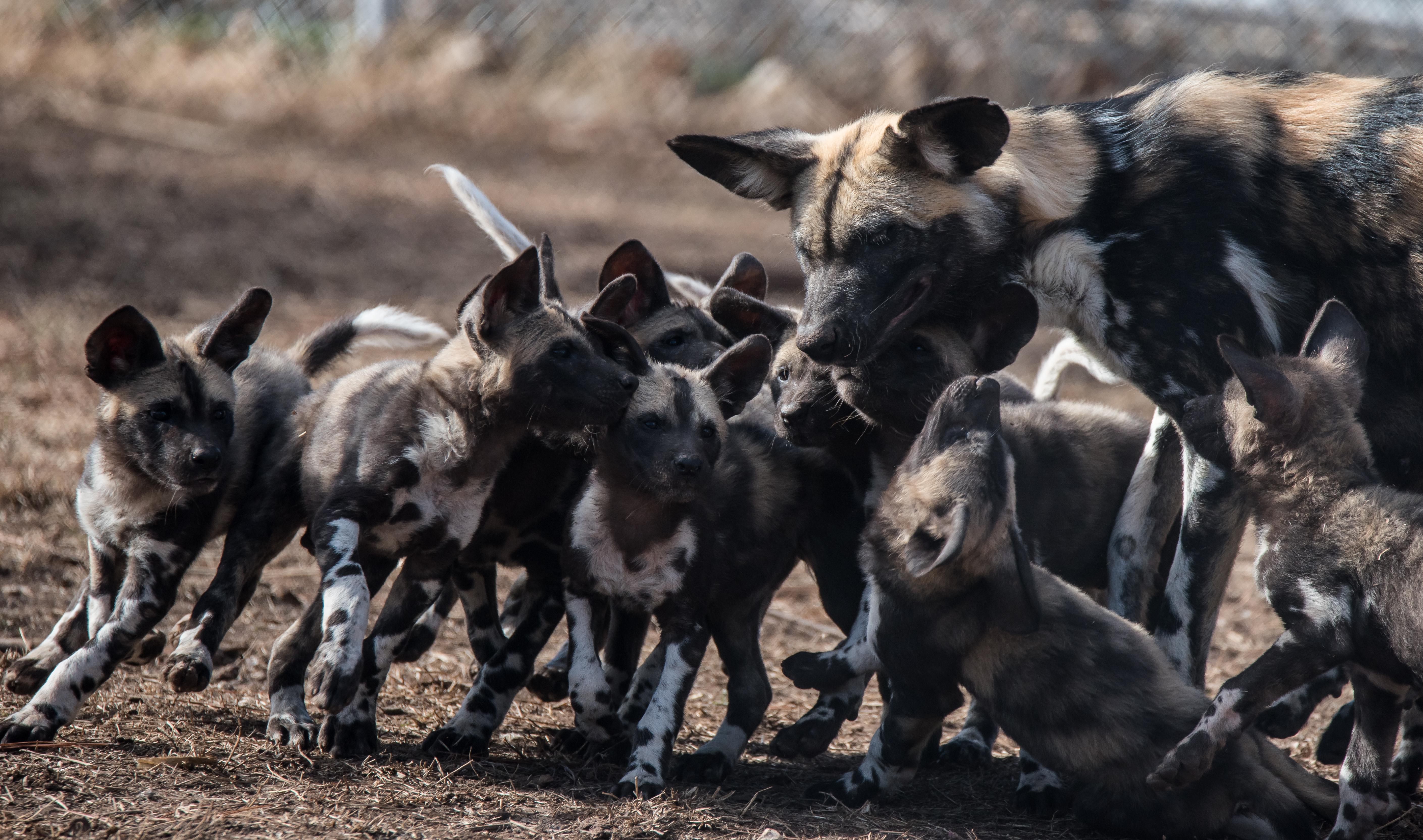 oklahoma city zoo the explorer in you hero dogs