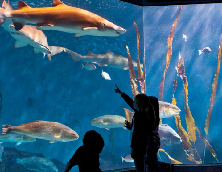 Web design for Maritime Aquarium