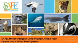Image of the title slide for SAFE African Penguin Conservation Action Plan Update and Call for Participation video