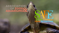 Image of a Western Pond Turtle and the logo for AZA and SAFE