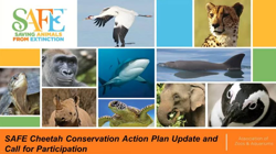 Image of introductory slide for the SAFE Cheetah Conservation Action Plan Update and Call for Participation Webinar