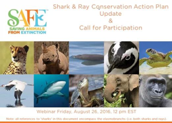 Image of introduction slide for the Shark & Ray Conservation Action Plan Update & Call for Participation Webinar