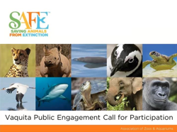 Image for the Vaquita Public Engagement Call for Participation webinar