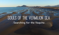 Image with the text Souls of the Vermilion Sea: Searching for the Vaquita