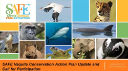 Image of the title slide for the SAFE Vaquita Conservation Action Plan Update and Call for Participation webinar