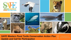 Image of the title slide for the SAFE Western Pond Turtle Conservation Action Plan Update and Call for Participation