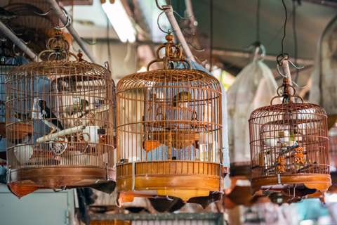Photo of live birds in hanging cages at a wildlife market.
