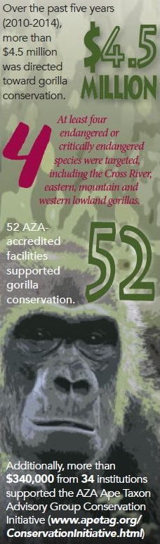 Image of Gorilla Conservation Infographic