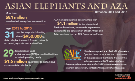 Image of Asian Elephant conservation infograph