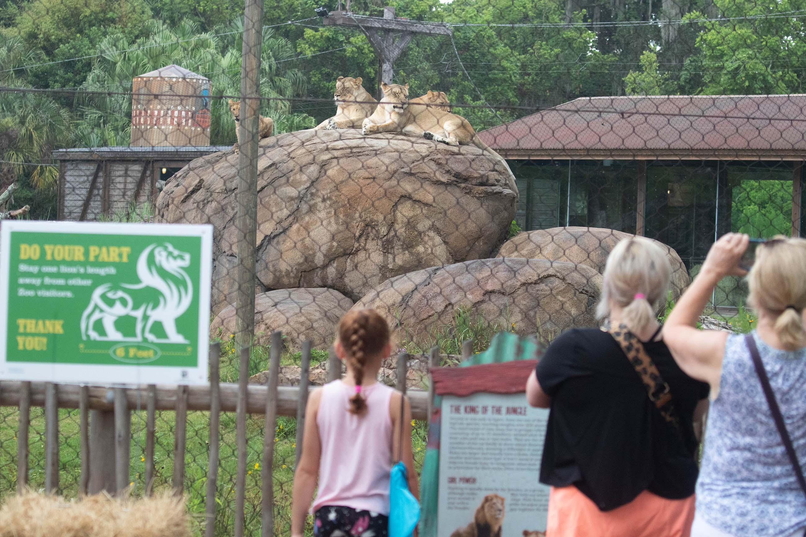 Family at the lion habitat