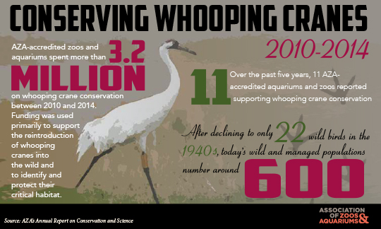Image of Whooping Crane Conservation Infographic