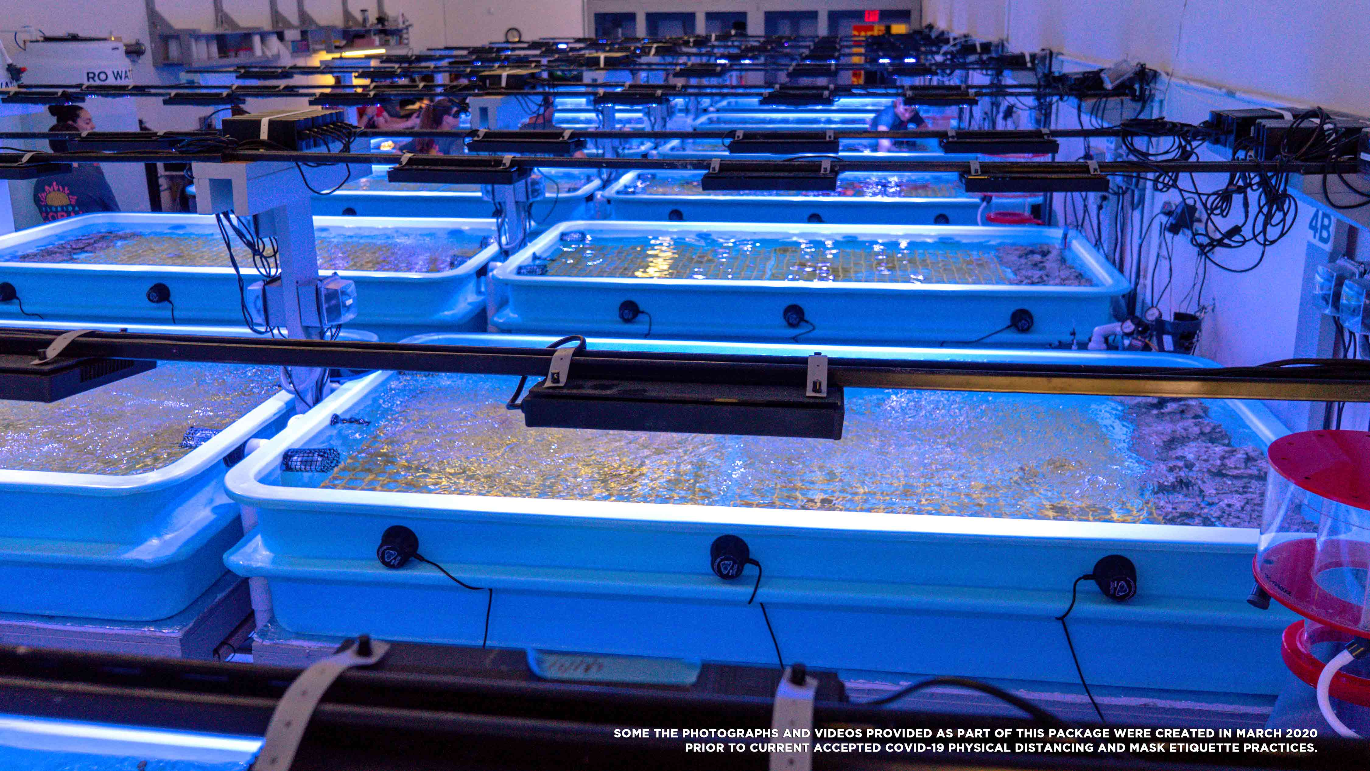 Photo of the Florida Coral Rescue Center