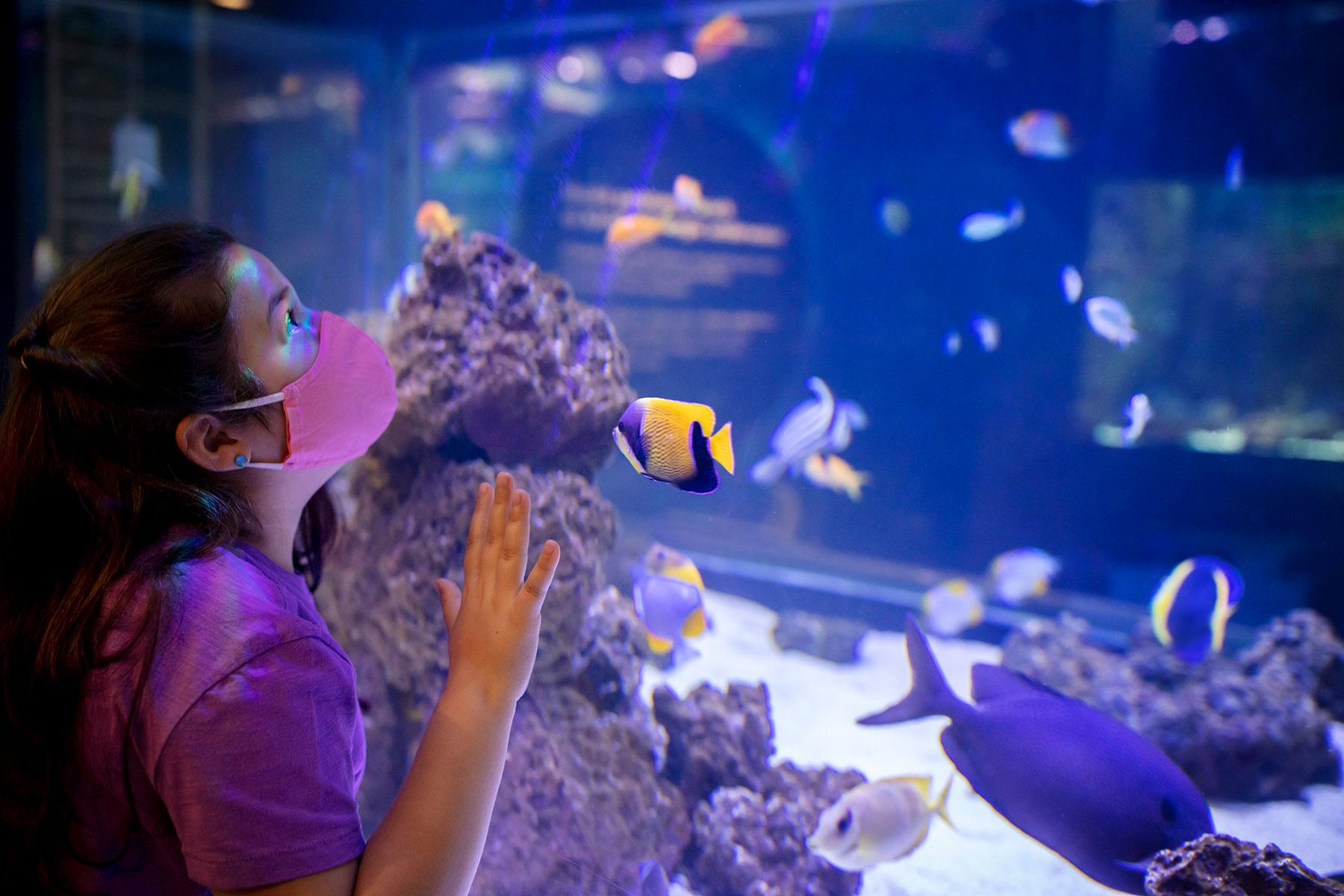 A young girl looks at fish a Shedd Aquarium