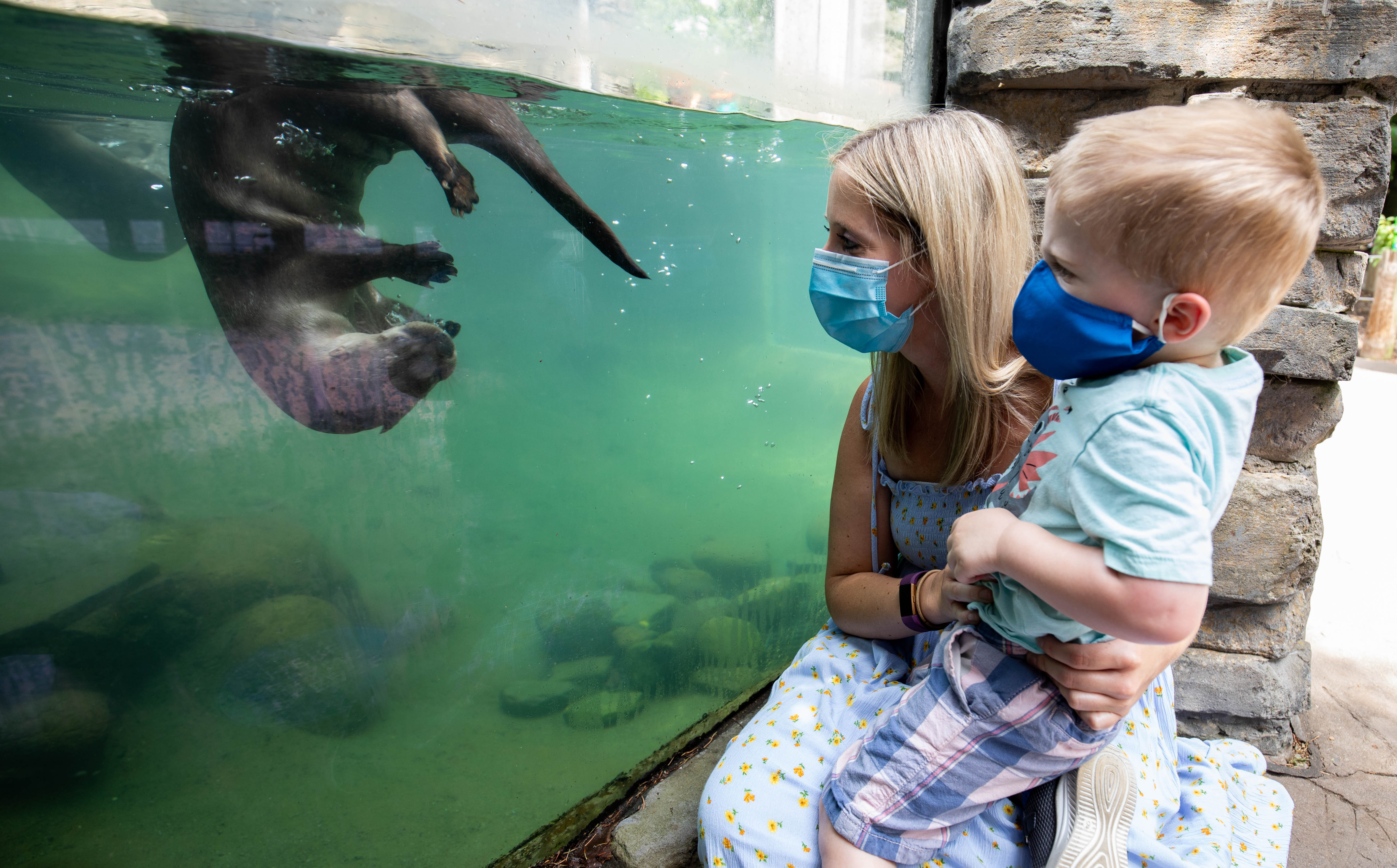 A woman and child watch an otter swimming