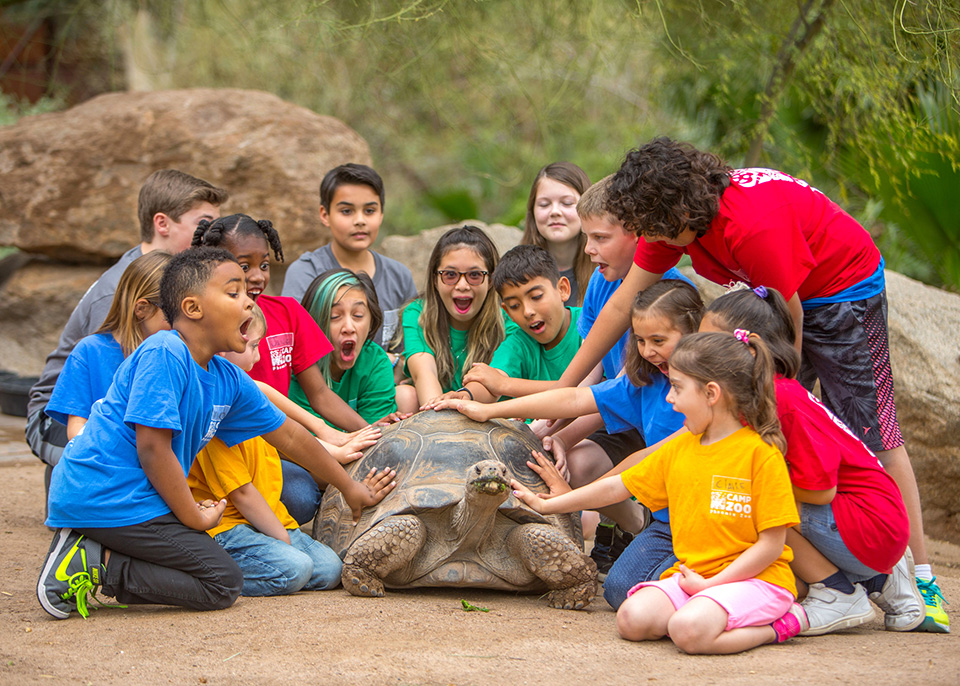 Camp kids with a tortoise