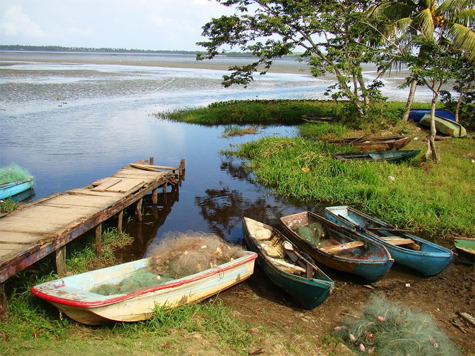 Boats pulled up on a grassy shore.