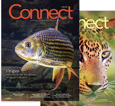 Image of two stacked Connect Magazine Covers