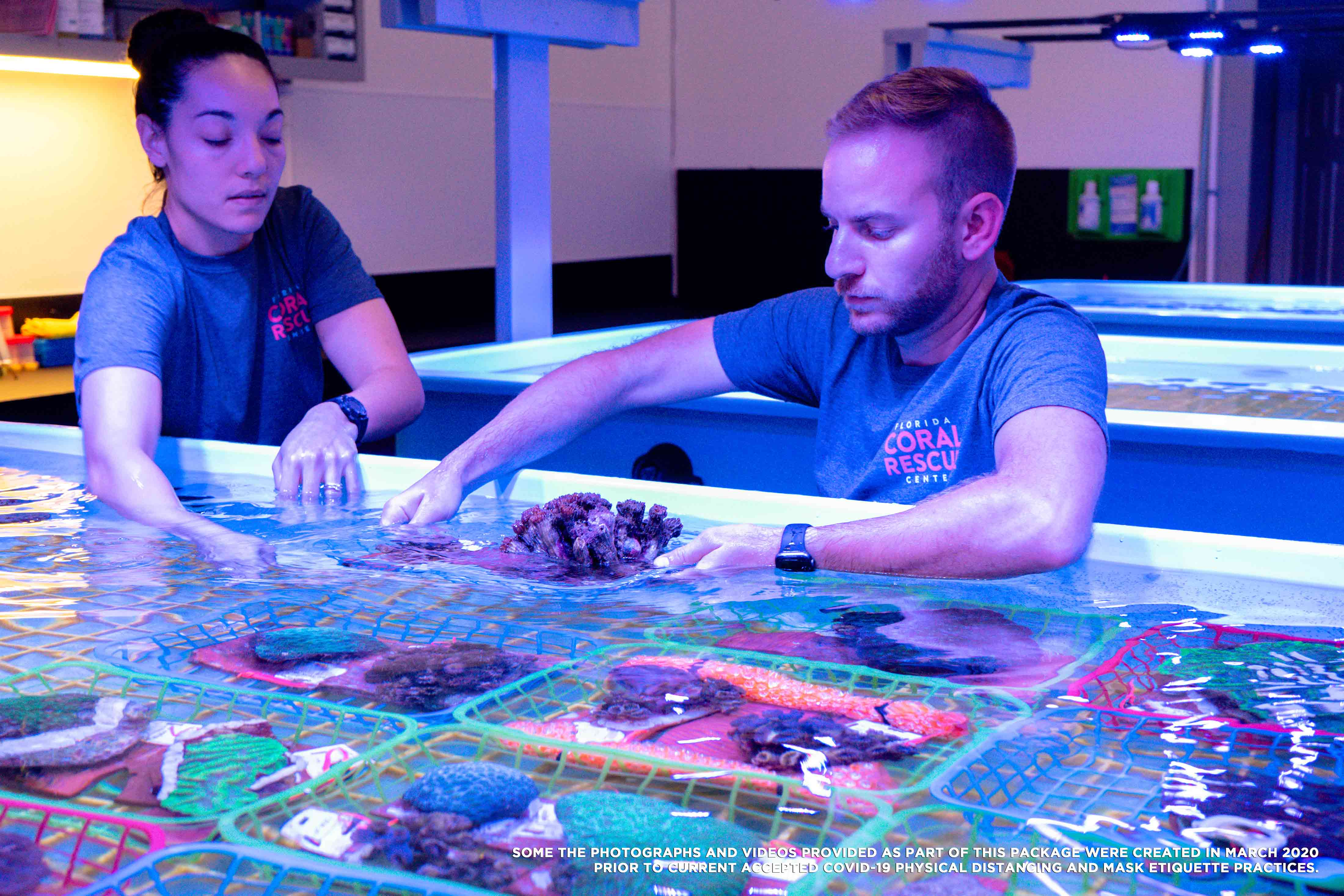 Staff at the Florida Coral Rescue Center working with the coral
