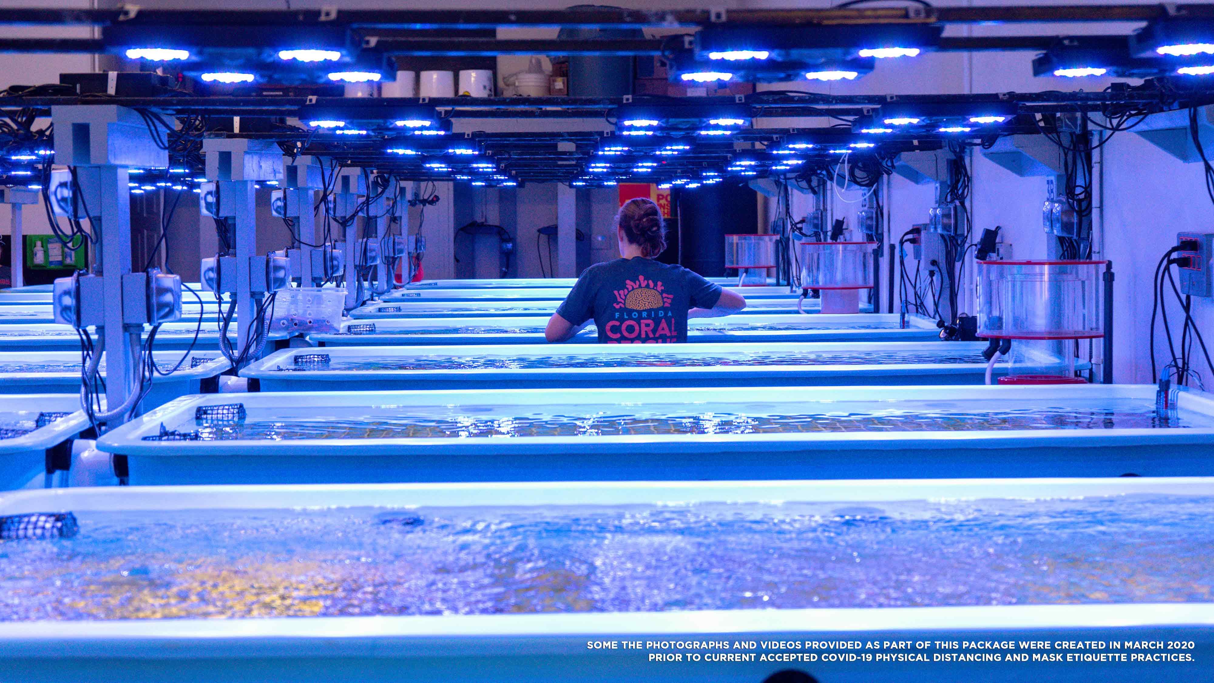 Inside the Florida Coral Rescue Center