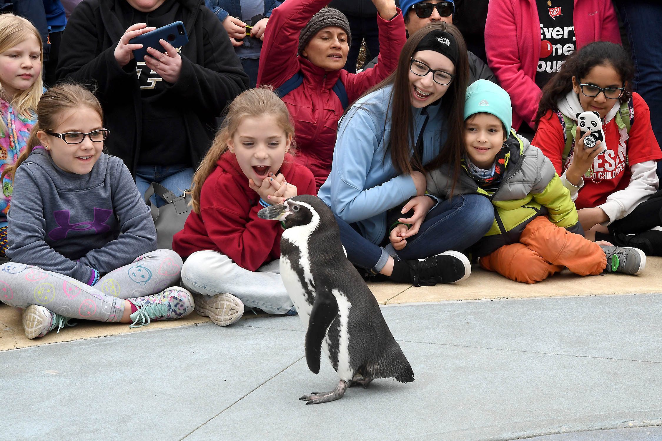 A group of children watch a penguin