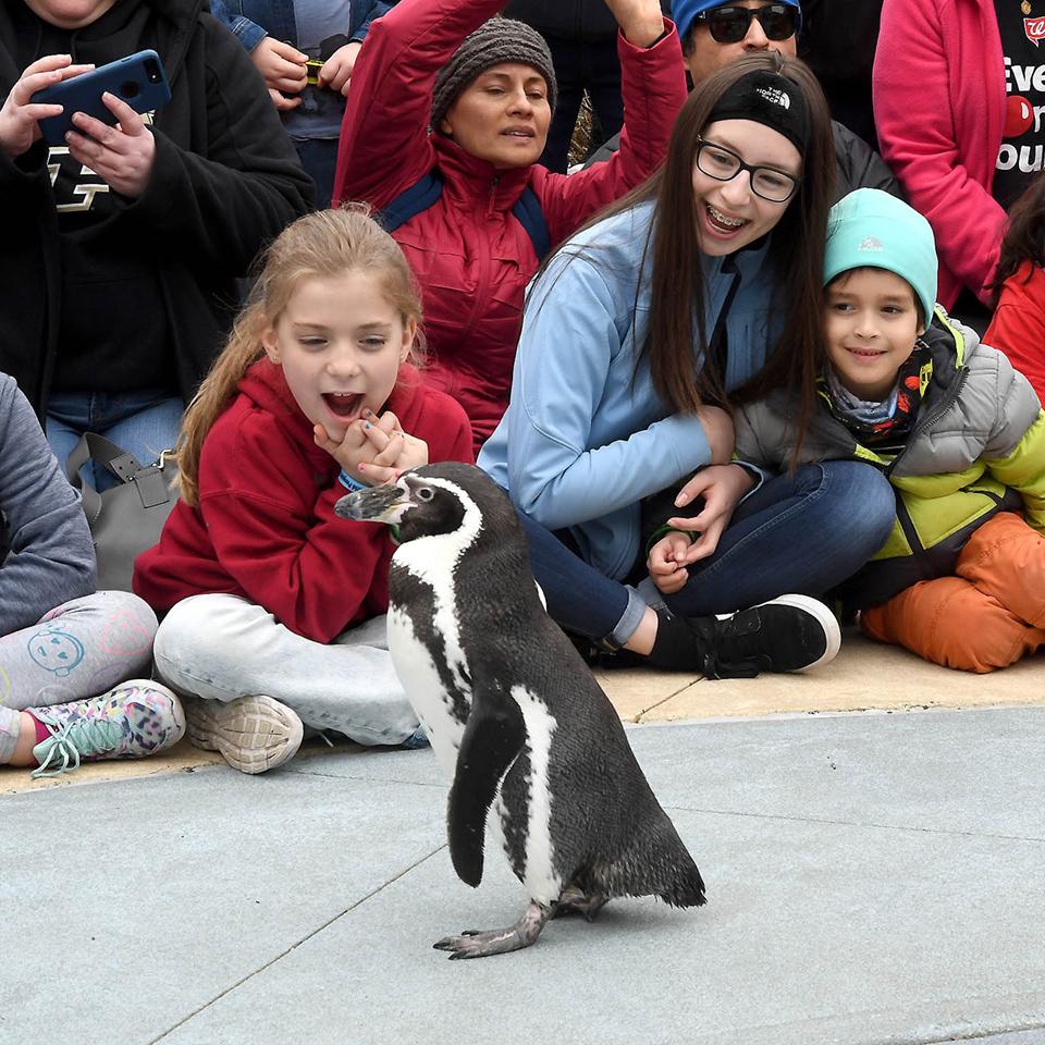 A group of children watch a penguin walking