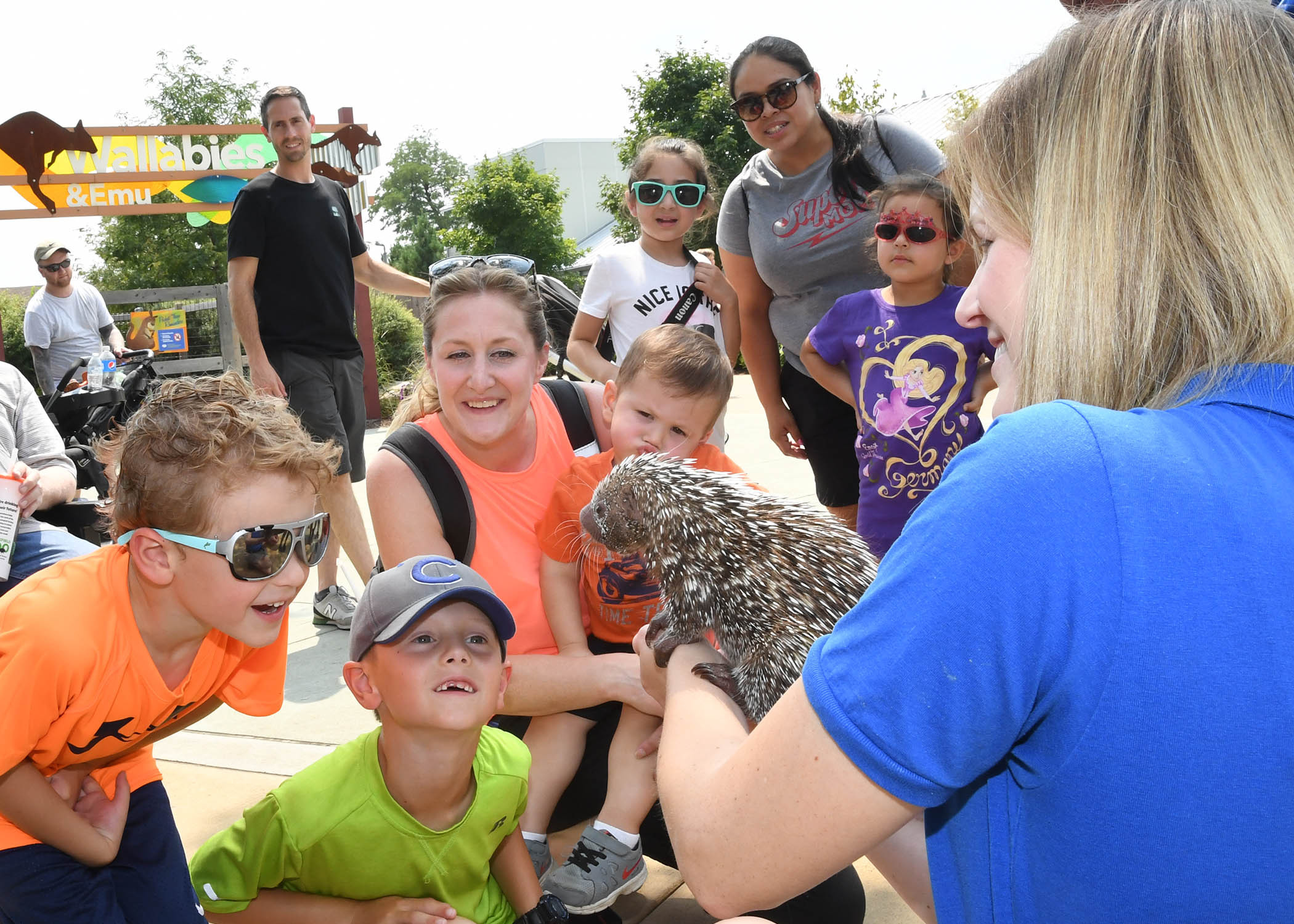 An animal keeper holds a prehensile tailed porcupine and shows a group of kids