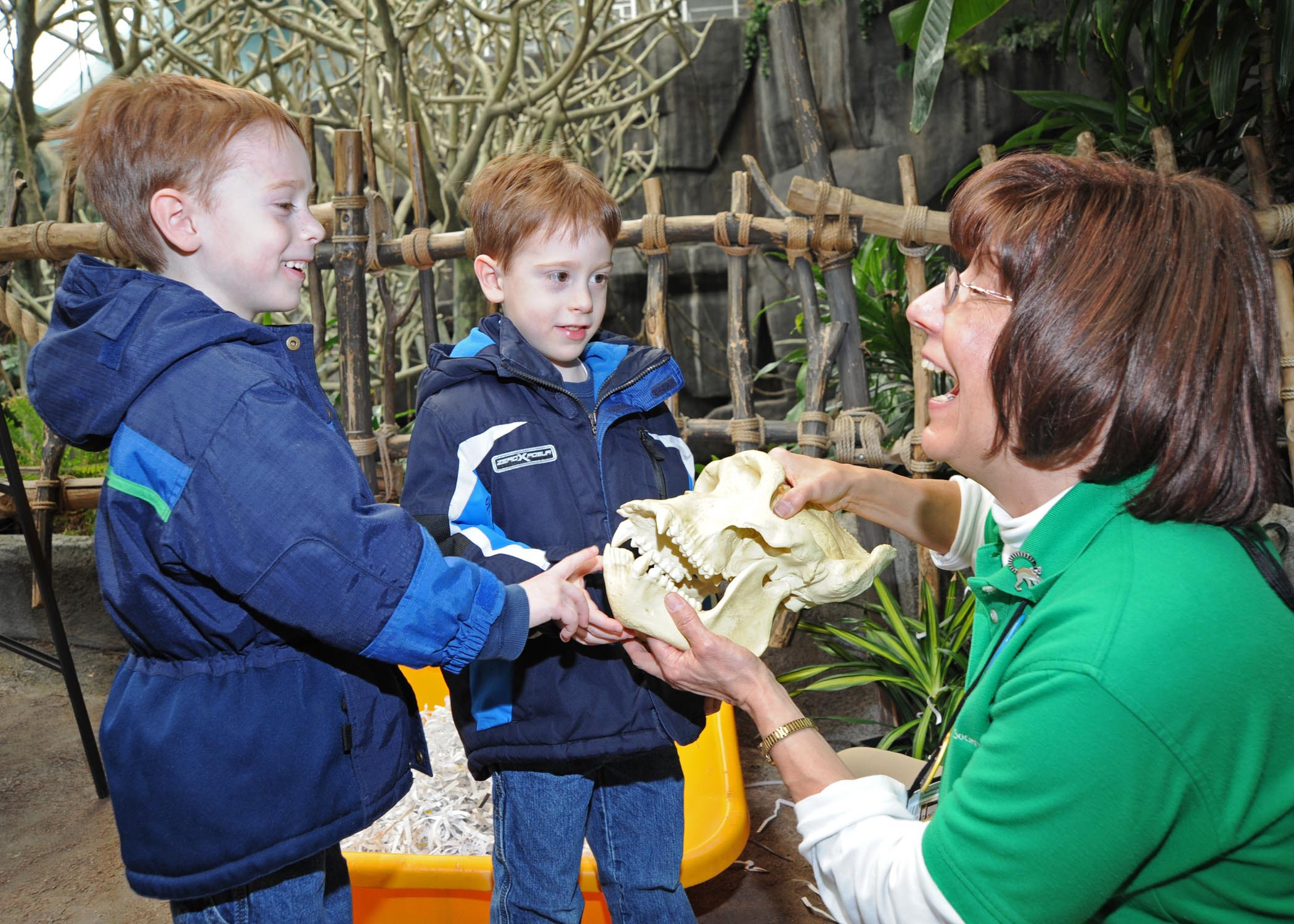 An educator shows two little boys a replica gorilla skull