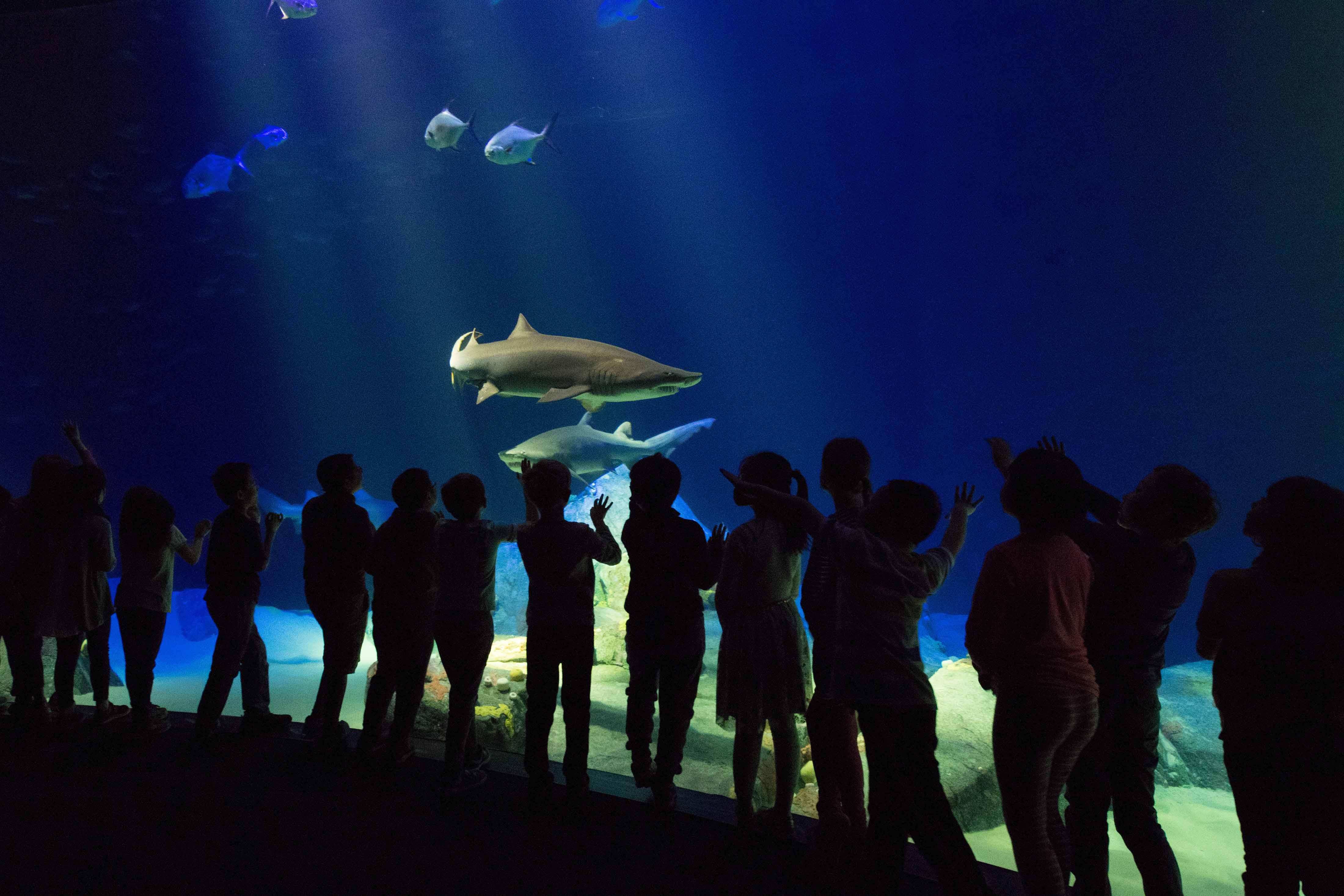Visitors at New York Aquarium watching sharks swim