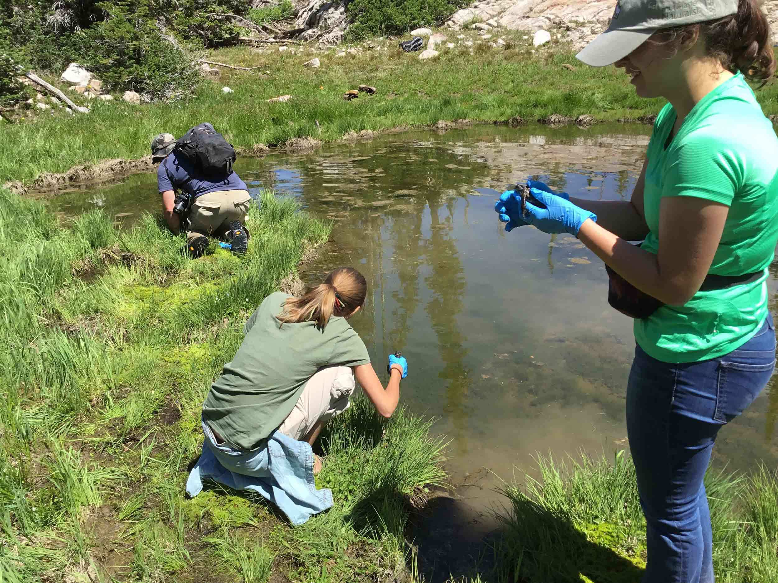 Utah's Hogle Zoo searching for boreal toads