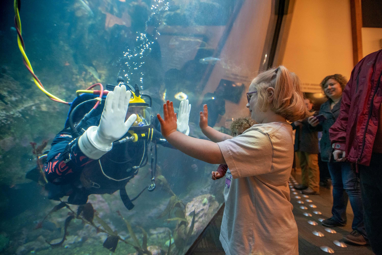 Dream Night at Seattle Aquarium