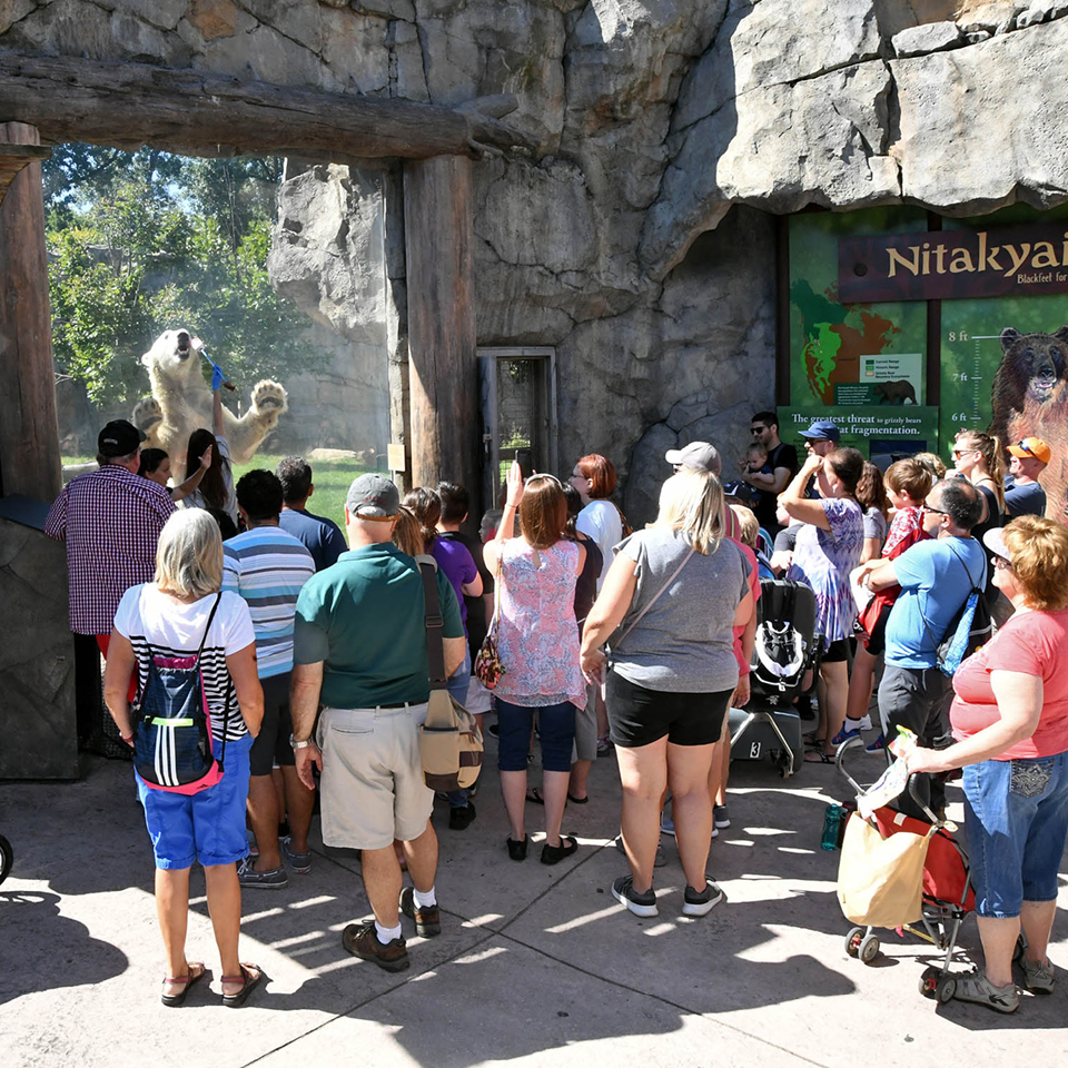 A group of zoo guests watch a polar bear enrichment session